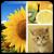 دانلودPhoto Collage Editor 2.76_برنامه ساخت کلاژ اندرویدی
